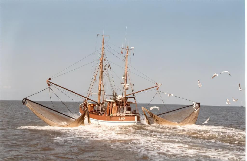 Nordseekrabben, krabbenfleisch, großßhandel, msc zertifiziert, bremerhaven, cuxhaven, oldenburg